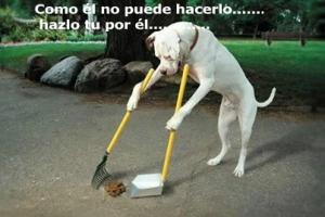 perro regogiendo basura_n(2)